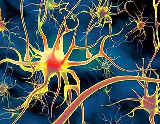 Маркетинг план является нервной системой Сетевого бизнеса
